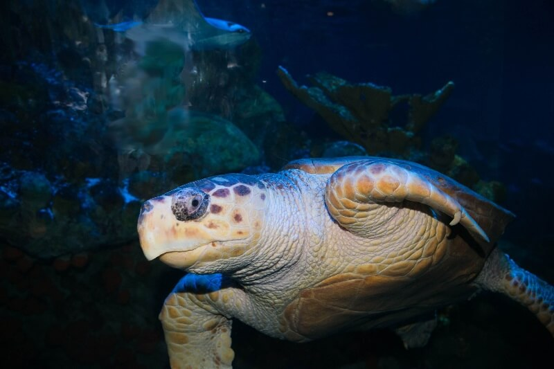 New England Aquarium - Myrtle the Turtle